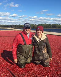 Get Your Waders -- We're Going to the Cranberry Harvest