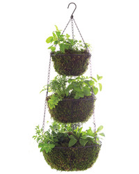 How to DIY a Hanging Basket of Vegetables and Herbs