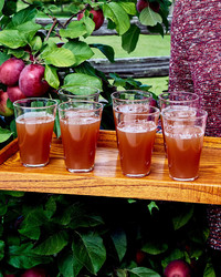 martha stewart apple cider recipe in glasses on tray in front of apple trees
