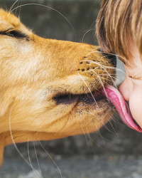 These Breeds are Perfect for Kids