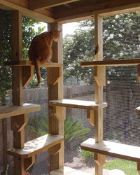 Catios: It's a Patio for Your Cat