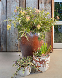 Breathe New Life into Your Patio with a Group of Container Gardens