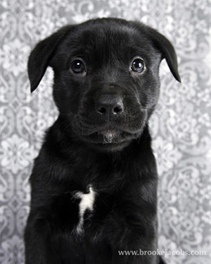 Brooklyn Puppies