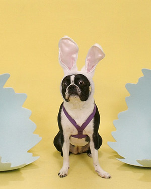 Easter Pet Contest