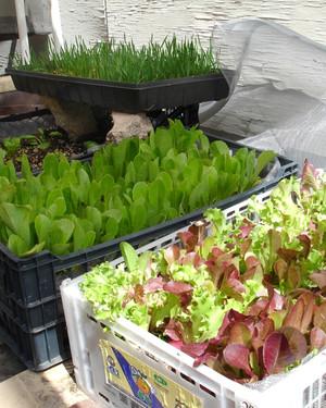 Your Best Vegetable Garden Tips