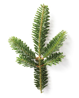 A Christmas Tree Glossary