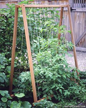 Vegetable Garden Glossary