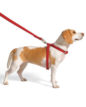 Safe Dog-Walking Tips