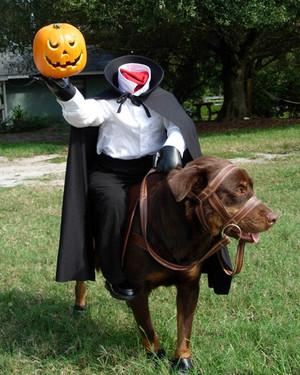 Halloween Pet Contest 2008