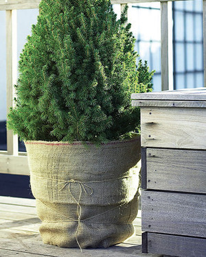 6 Simple Gardening To-Dos for Winterizing Your Flora