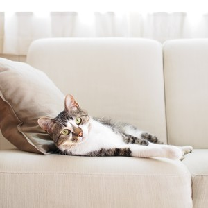 cat laying on a couch