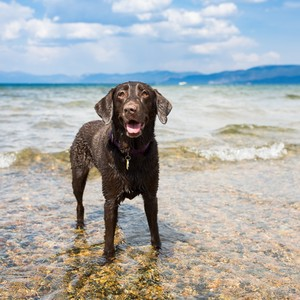 dog swimming at the beach