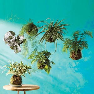 Grow Gorgeous Houseplants In Any Kind of Light