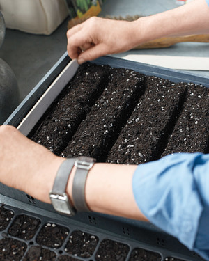 Seed Sowing Indoors