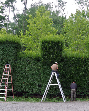 """First Harvests, Hedge Pruning, """"Pixels,"""" and More: The Latest from Martha's Blog"""