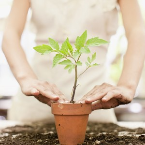 Woman repotting plant in terracotta planter