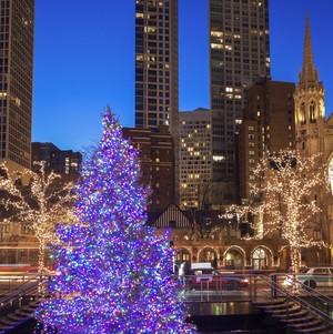 Chicago Christmas tree