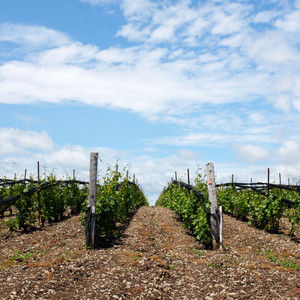 A Winery Detour