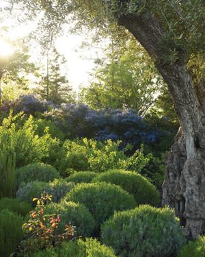 Garden Tour: Sonoma Winery