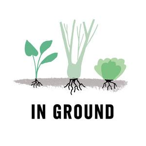 In Ground