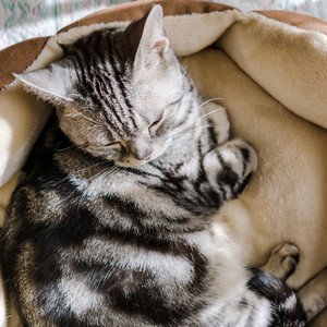 cat napping in tan pet bed