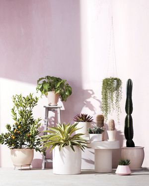 7 Moving Tips for Transporting Your Houseplants Safely