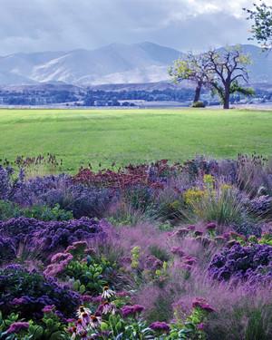 A Majestic Meadow in the Colorado Rockies