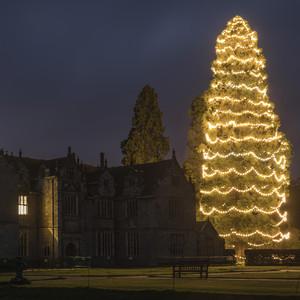 Wakehurst Christmas tree