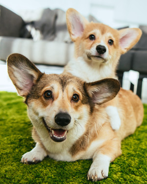 The Best Dog Breeds for Apartment and Condo Living