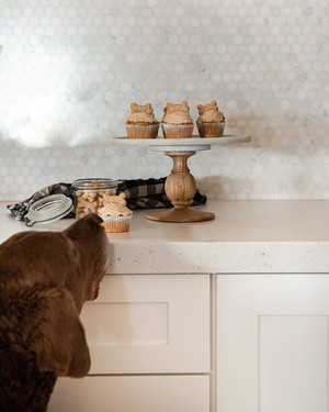 Our Tastiest Homemade Dog Treats