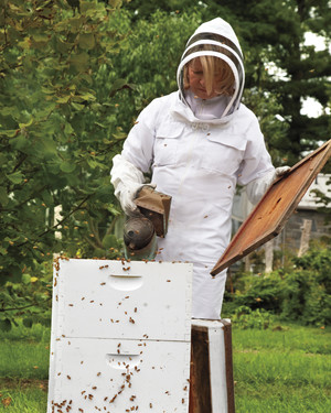 Busy As a Bee: Martha's Hives