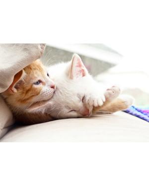 Kitten play collar diy sweepstakes