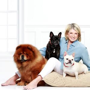Martha Chows Frenchies Merch公司