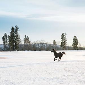 horse running winter