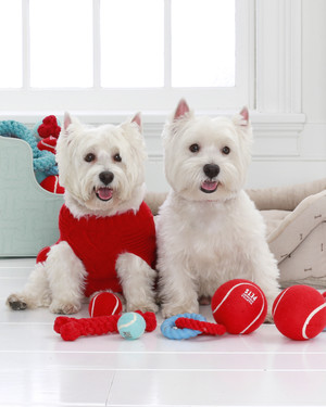 """Petiquette"" Lessons: How to Keep Your Pets Well-Mannered During the Holidays"