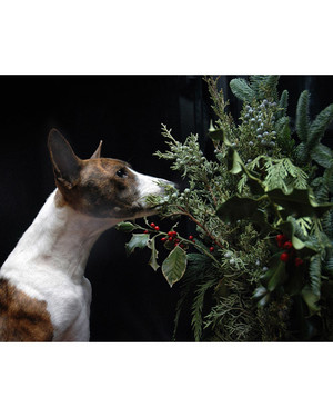 Santa Pets Contest 2009