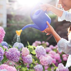 woman watering hydrangeas with purple watering can