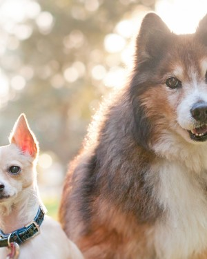 The Best Dog Breed for You, Based on Your Personality Type