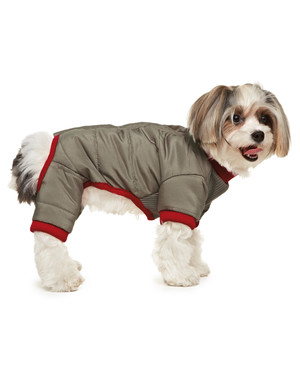 Your Pets' Fall Fashions