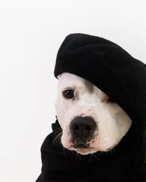 Pet Fashion Contest