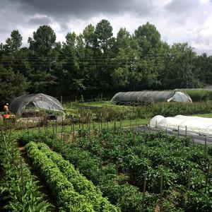 the compact farm ten mothers farm