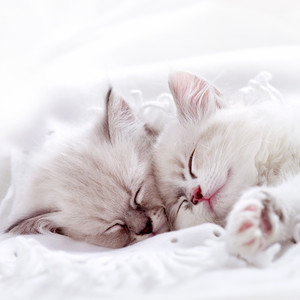 White Kittens Sleeping