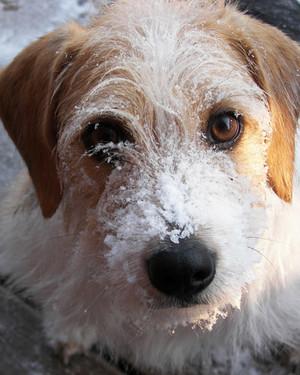 pets_snowangels_7278898_122717_10425910.jpg