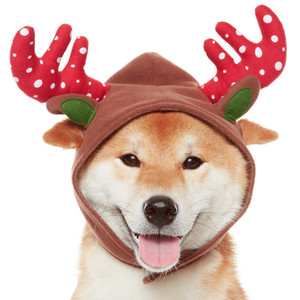 Perfect Pet Holiday Outfits & Accessories
