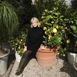 188APP玛莎·斯图尔特穿着气溶胶雨靴坐在盆栽植物上