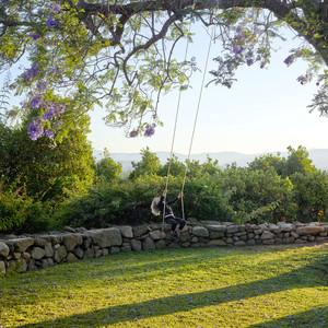 green grass yard with child swinging on tree swing