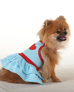 Nautical Accessories for Your Pet