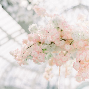 Blossoms Abound