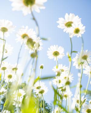 Eight Natural Remedies for Seasonal Allergies
