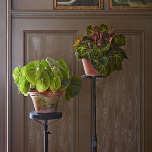 Martha On Her Favorite House Plants
